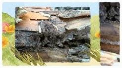 Pest Control Grand Prairie TX 214-504-2875 Ameri-Tech Termite Control