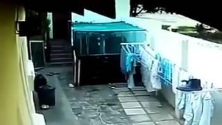 闘犬乱舞.