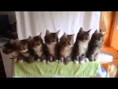 Katzen Wackeln mit dem Kopf - YouTube