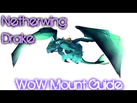 Netherwing Drakes Guide!