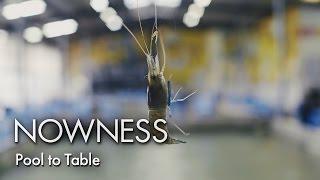 Urban shrimping in Taiwan