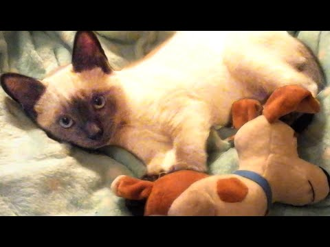 Cute and Funny Cat Videos to Brighten Your Day!