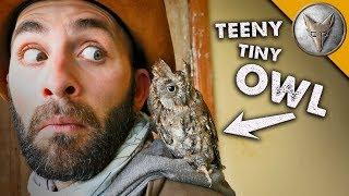 teeny tiny OWL! (o)v(o) thumbnail