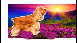 видео Аденовирусная инфекция у собак: симптомы и лечение аденовируса