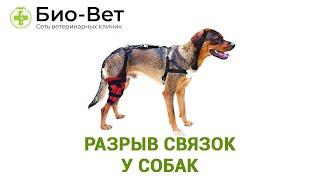 Разрыв связок у собак. Ветеринарная клиника Био-Вет.