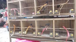 Phiên chợ chim cảnh Hà Nội