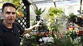 Объявления о продаже для тех, кто хочет купить комнатных растения, домашные цветы: алоэ, денежное дерево, диффенбахия, золотой ус, индийский.