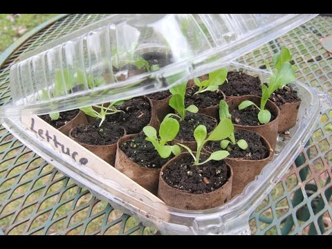 Biodegradable Seed Starting Pots and Mini Greenhouse, Garden DIY Hack