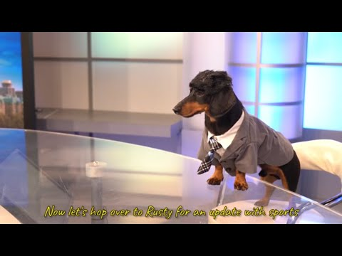 Ep 9: ANCHORDOG - Funny News Dog Video