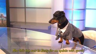 Ep 9: ANCHORDOG  Funny News Dog Video