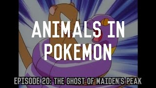Real World Animals in Pokemon | A Conundrum