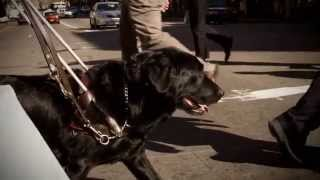 Guide Dogs Australia - Most Trusted Charity Tvc