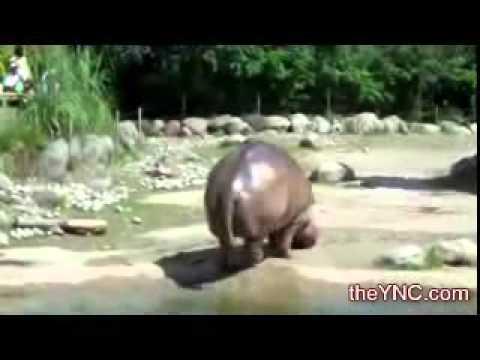 Big fat hippo poop.!