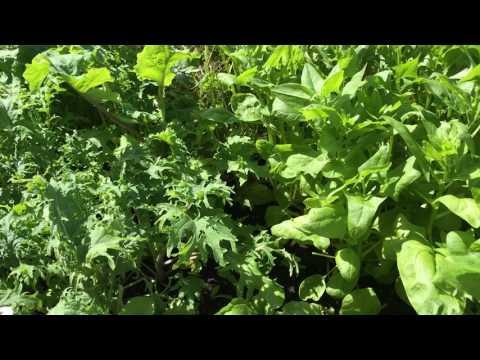 Täckodling i praktiken 3 snabba sätt på plats direkt i odlingen i landet pallkragen eller krukan