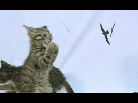 Kittens Reenact Horror Films