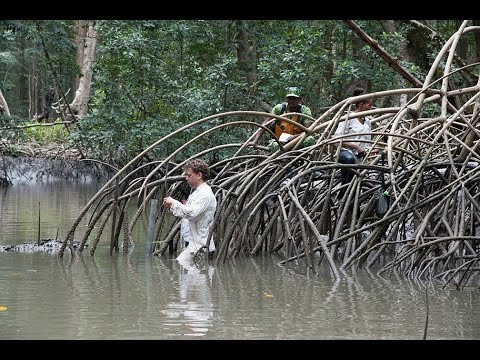 NASA, Partner Space Agencies Measure Forests In Gabon