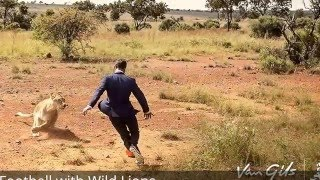amazing man playing football with lions complete video