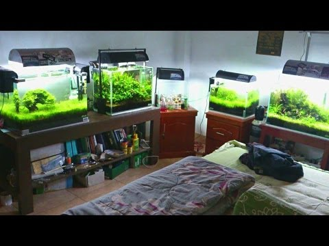 Aquascape Makassar - Indonesia - YouTube