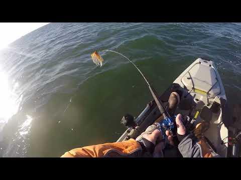 Kyack offshore Rockaway extreme stripe bass bonanza