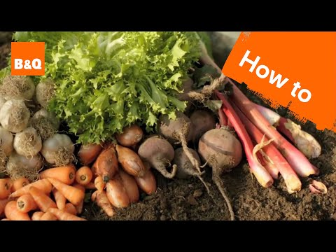 An duction to growing your own fruit & veg