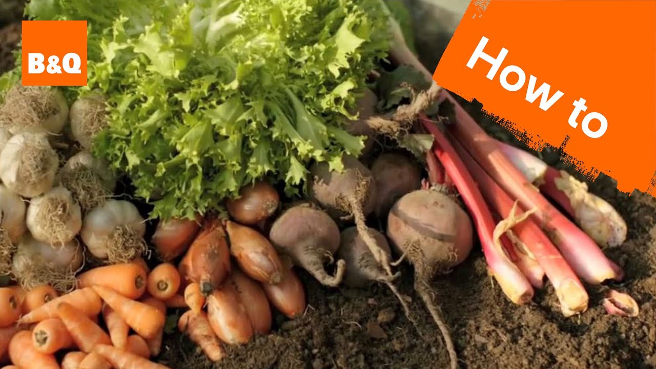 An Introduction To Growing Your Own Fruit Veg