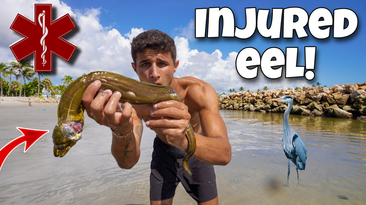 RESCUING Injured EEL From DEATH!!