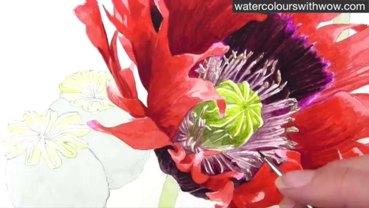 How to paint a realistic poppy centre in watercolor by anna mason how to paint a realistic poppy centre in watercolor by anna mason mightylinksfo Gallery