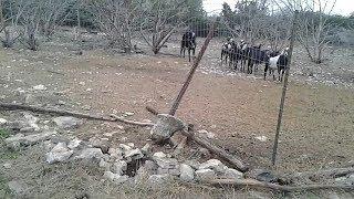 Animals Break The Fence