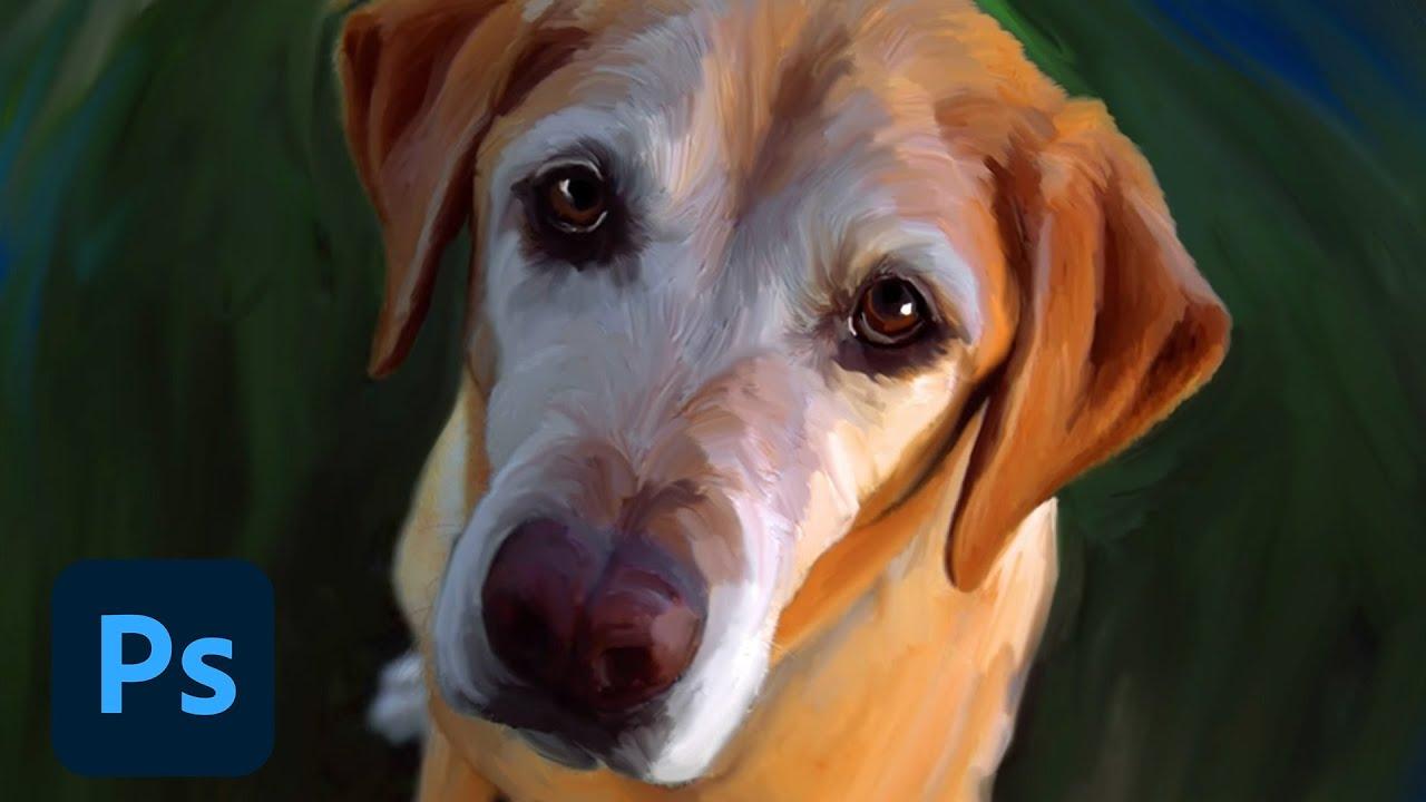 adobe update management tool 9 painter