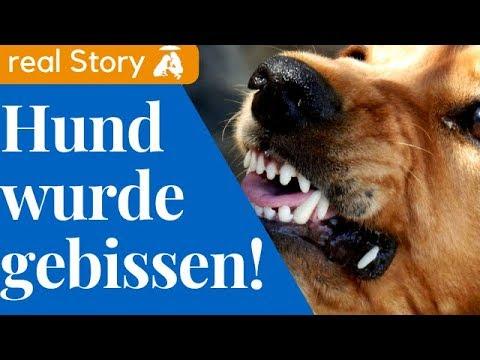 Storytime / Hund wurde GEBISSEN I  Mia and Me DogTV
