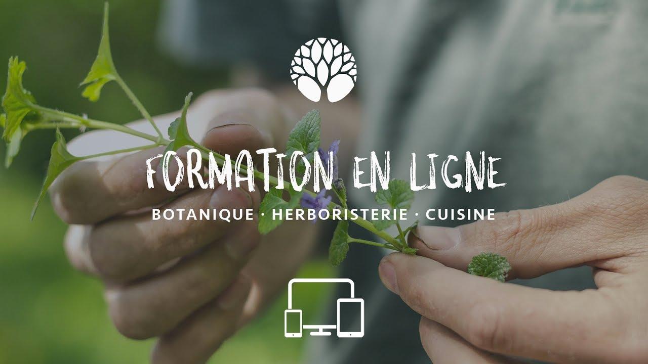Formation en ligne botanique, cueillette et herboristerie