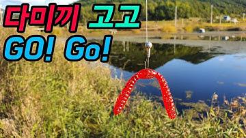 """다미끼 """"고고""""로 잡아보자 / 배스낚시 / bass fishing"""