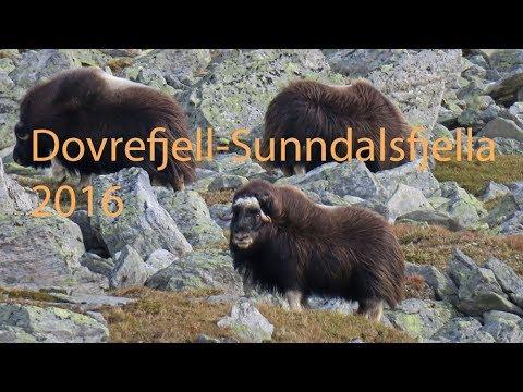 Dovrefjell-Sunndalsfjella National Park 2016