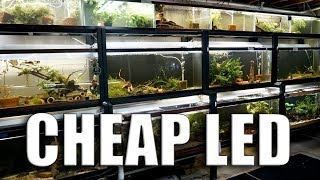 Lighting for $29 a tank! HOW and WHY I did it