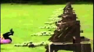 Amazing Race Watermelon Face Shot (Hangover Remix)