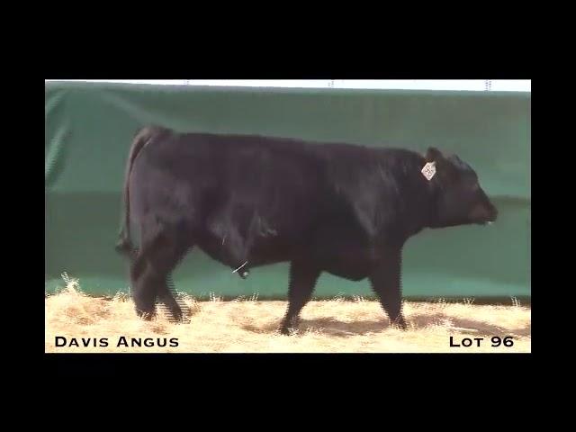 Davis Angus Lot 96
