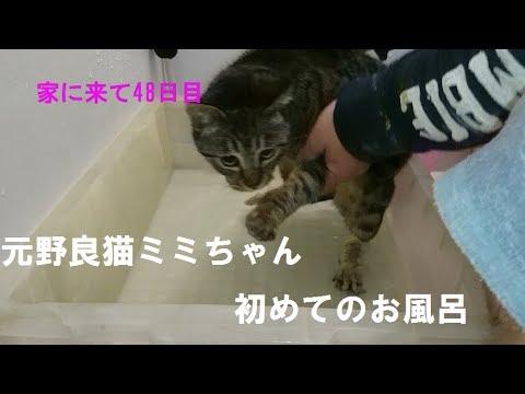 元野良猫ミミちゃん猫生初めてのお風呂!!