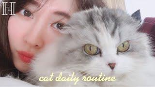 YouTube動画:【ハイパー猫の日】けむしの1日に密着🐱VLOG🤍
