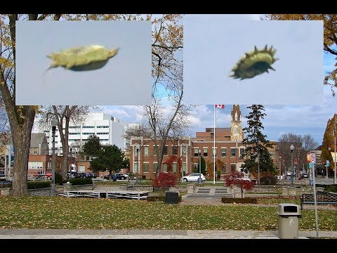 Oshawa photographer captures 'unidentified flying object'