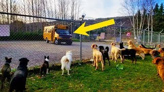School Bus Takes Pups To Doggy Daycare Every Morning, In The Cutest Way Imaginable!