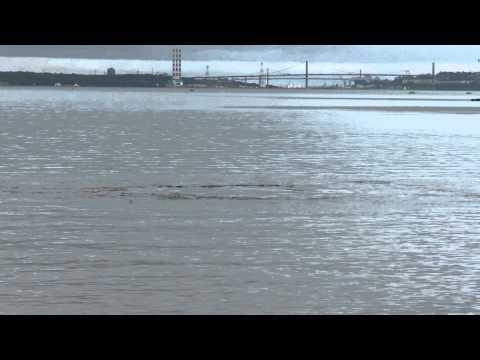 Strange Circular Water waves in Bedford Basin in Nova Scotia