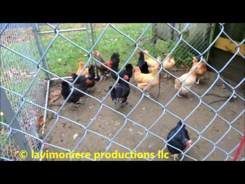 home made chicken coop and run part 2