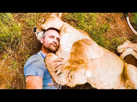 Naughty Lion Compilation | The Lion Whisperer