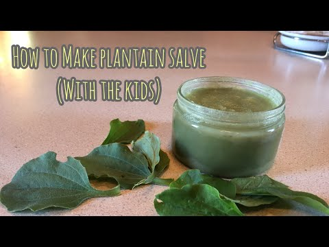 How to Make Plantain Salve || Anti-itch Ointment Made from Backyard Weeds