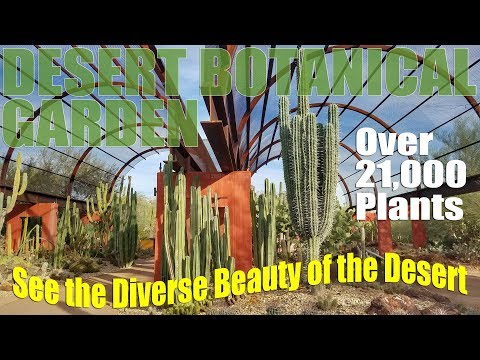 Desert Botanical Garden   Phoenix Arizona RV Travel Destination