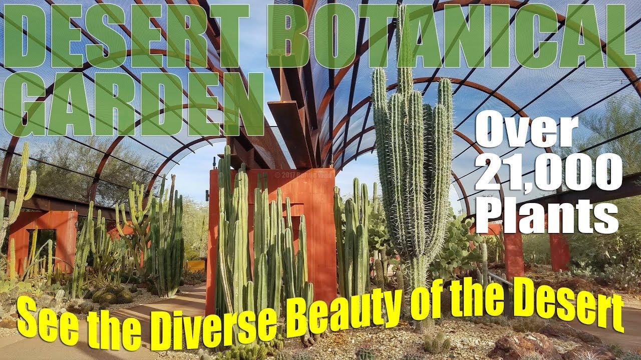 desert botanical garden phoenix arizona rv travel destination - Desert Botanical Garden