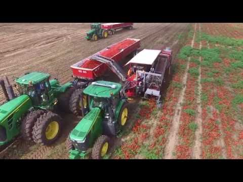 Red Hen Turf Farm - Drone Video - Tomato Harvesting 2016