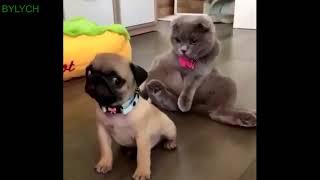 Смешное видео про домашних животных,кошек, собак.Смотреть бесплатно.
