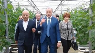 Губернатор поставил задачу круглогодично обеспечивать саратовцев свежими овощами