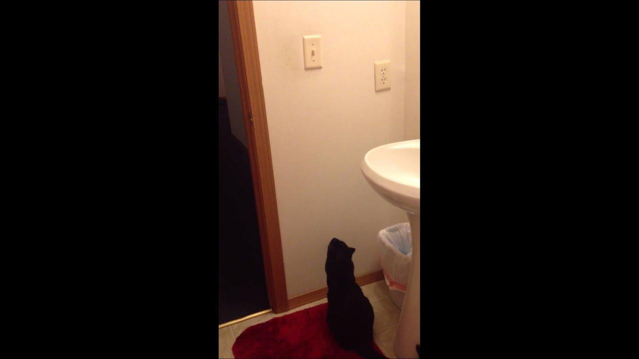 Bathroom Light Goes Off And On cat turns off bathroom light - youtube